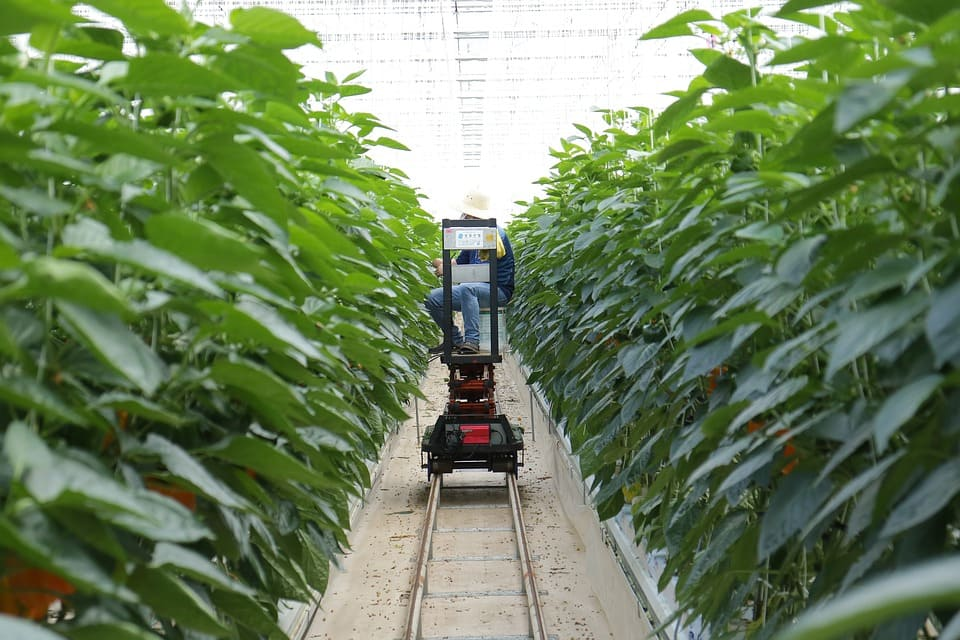 Iot In Agriculture Five Technology Uses For Smart Farming